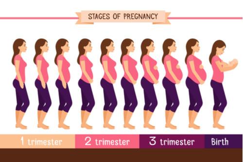 مراحل الحمل - صورة مجمعة لمراحل الحمل