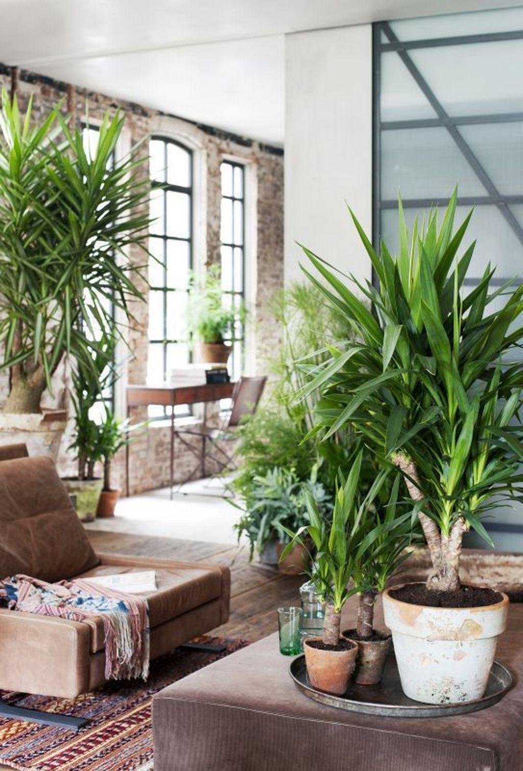 تجديد ديكور المنزل - نباتات الزينة