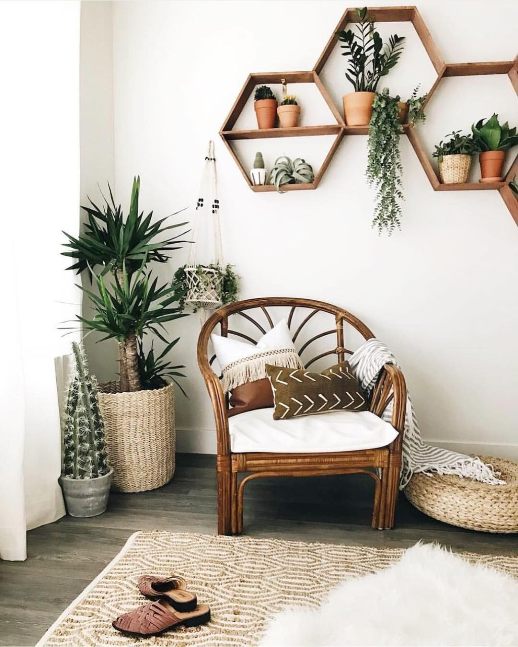 تجديد ديكور المنزل - نباتات للمنزل