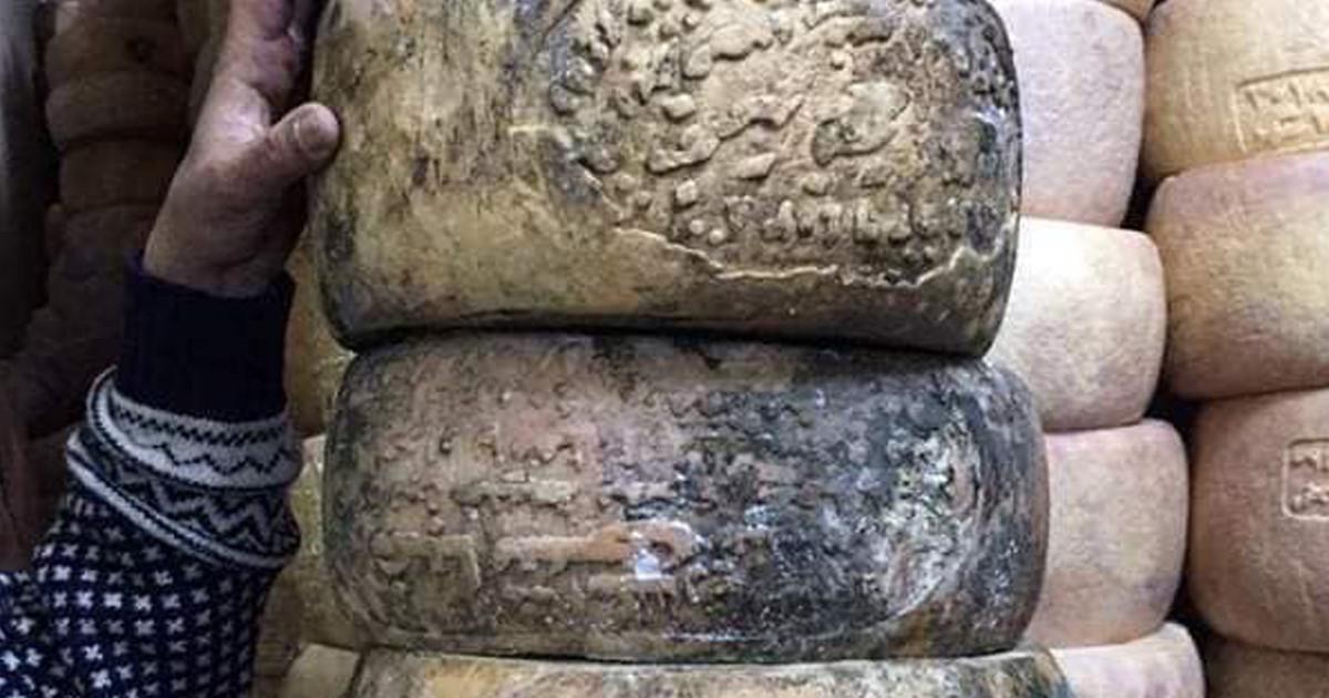 الطبقة الخارجية العفنة على الجبنة الرومي القديمة