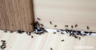حشرات ناقلة للفيروسات