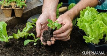 زراعة الخضراوات الشتوية في المنزل