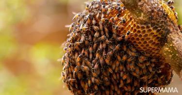 كيفية التخلص من خلية النحل في المنزل