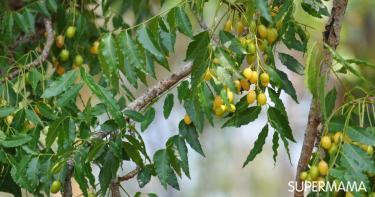 5 فوائد لشجرة النيم للبشرة لا تتجاهليها!