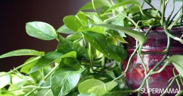 النباتات من أهم إكسسوارات المنزل