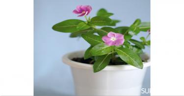 ٥- نباتات