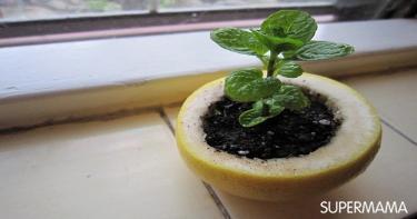 نباتات 7