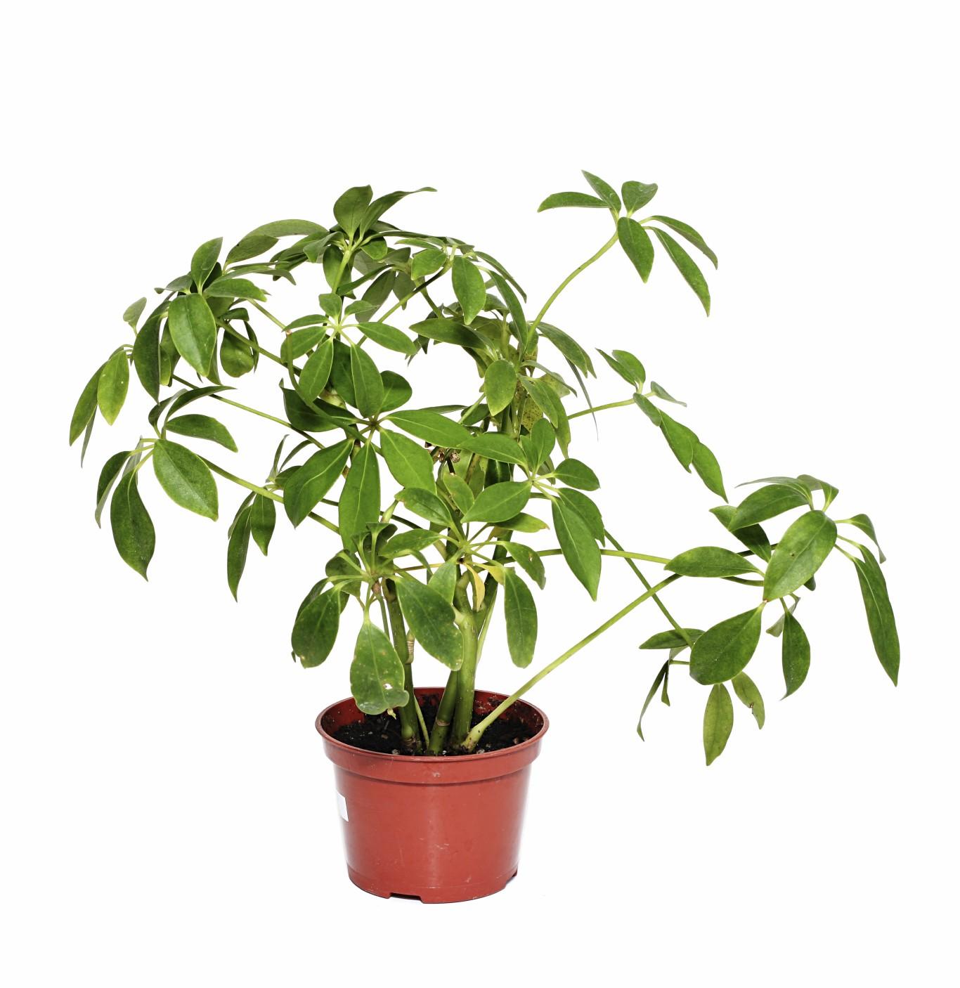 نباتات ومزروعات منزلية
